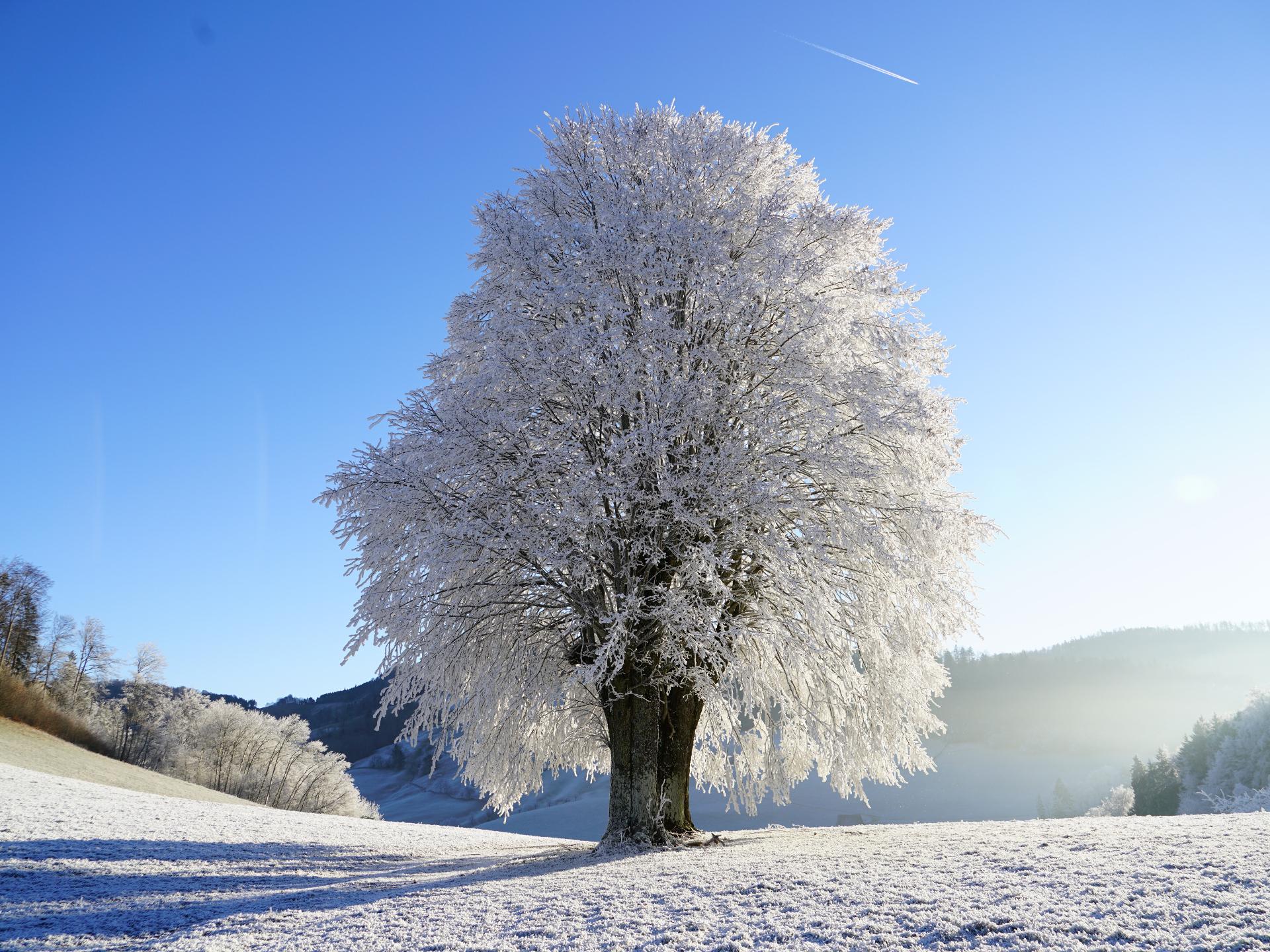 Obwohl viele Bäume sehr exponiert stehen, haben sie dennoch eine Methode gefunden, gut zu überwintern. - Photocredit: pixabay.com/Hans