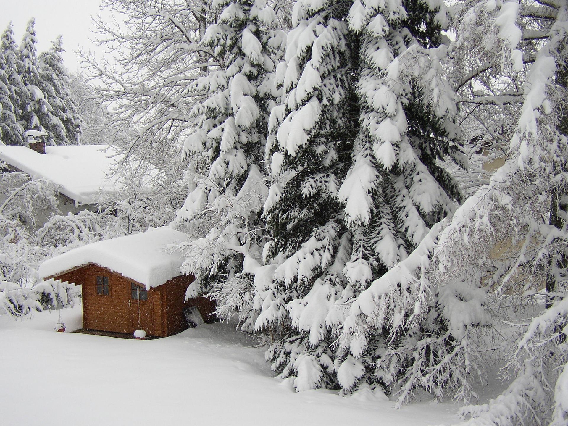Bei der Schneelast auf den Bäumen kommt es auch darauf an, ob es sehr nasser, schwerer, oder trockener, leichterer Schnee. - Photocredit: pixabay.com/Separatus