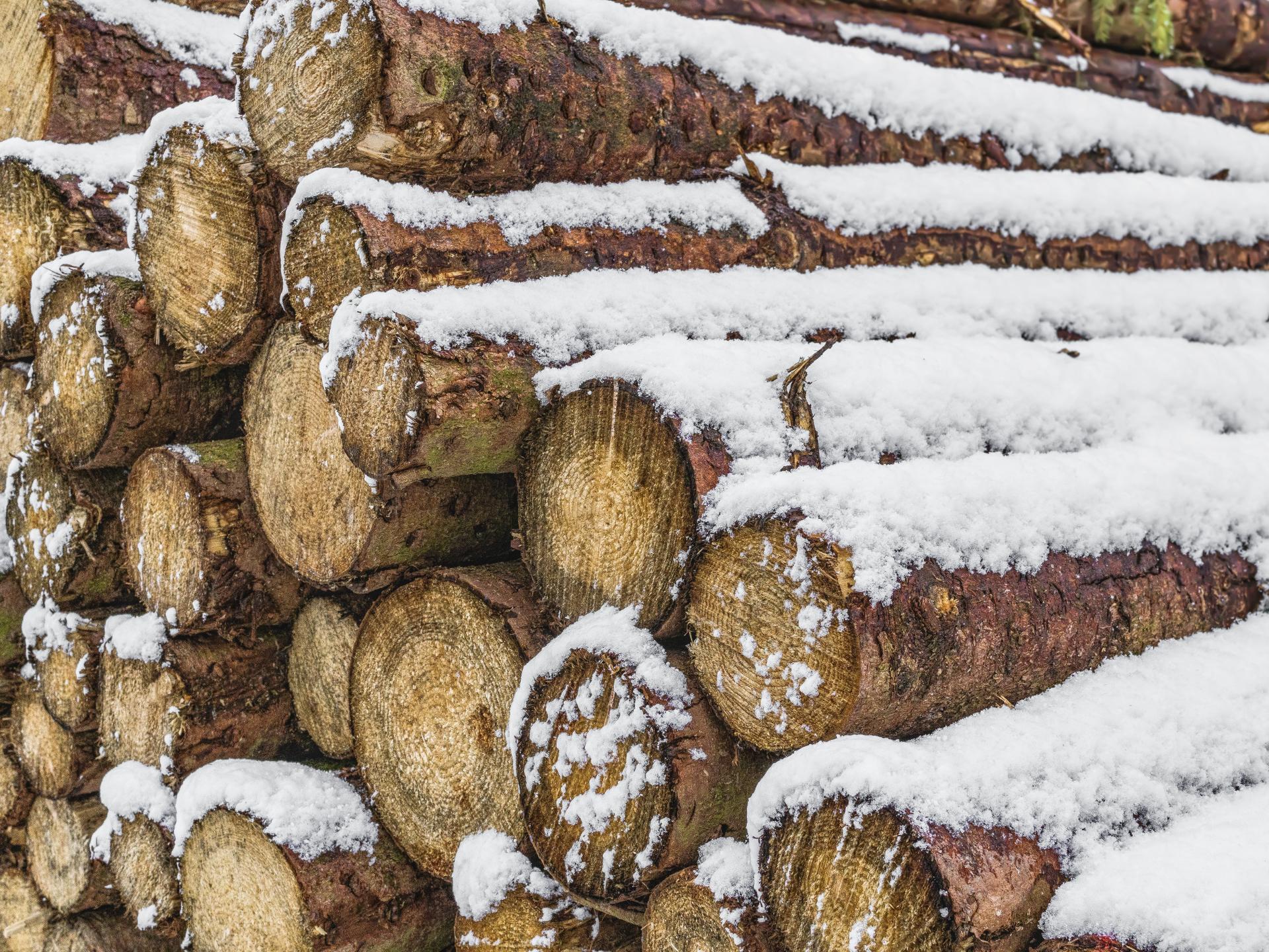 Nach dem Fällen der Bäume müssen sie noch längere Zeit gelagert werden, bevor sie zum Bauen oder Verheizen verwendet werden können. - Photocredit: pixabay.com/O12