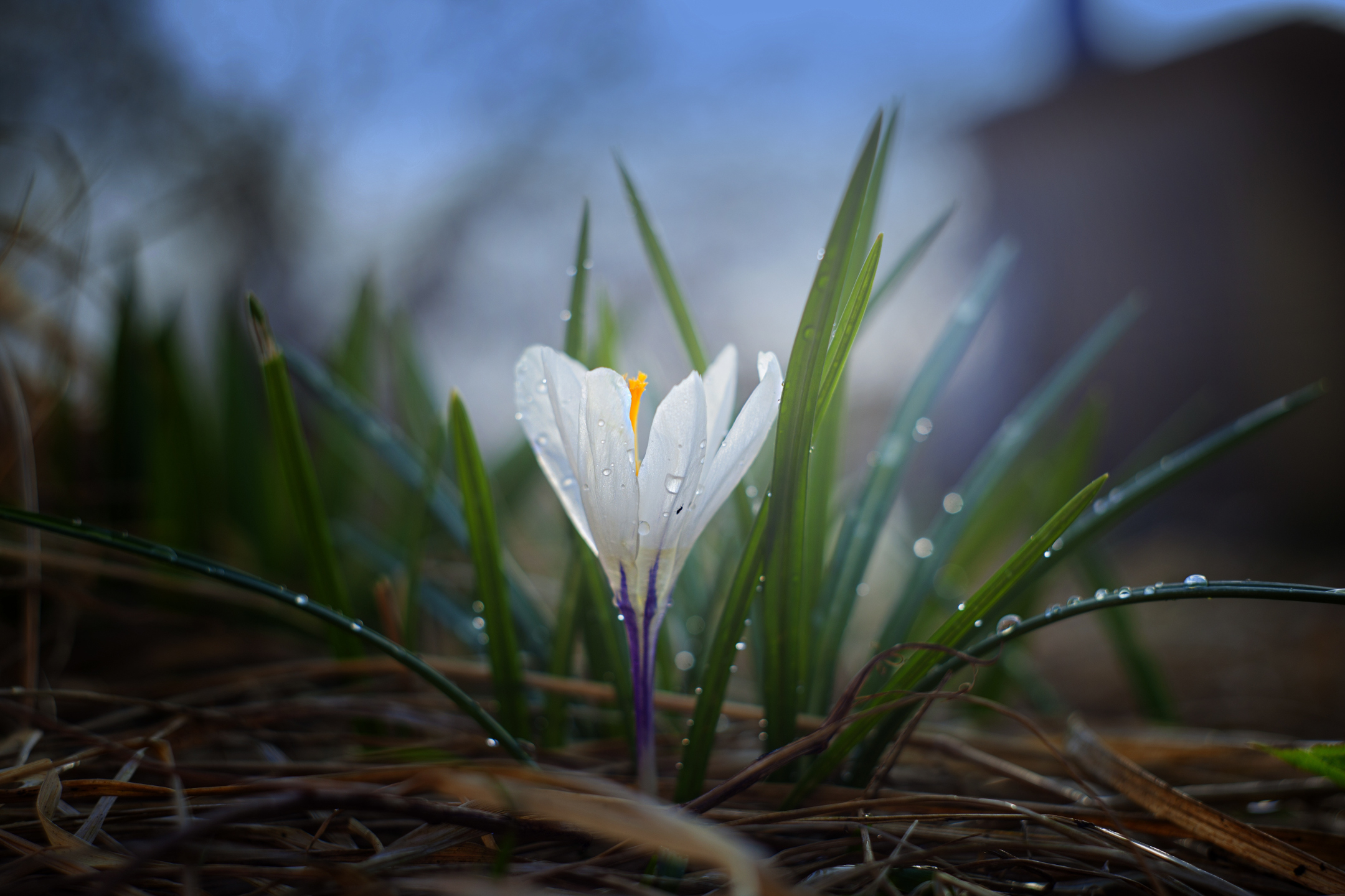 Der Frühling steht im Zeichen der Schönheit. Überall blüht es. - Photocredit: pixabay.com/shapkasushami