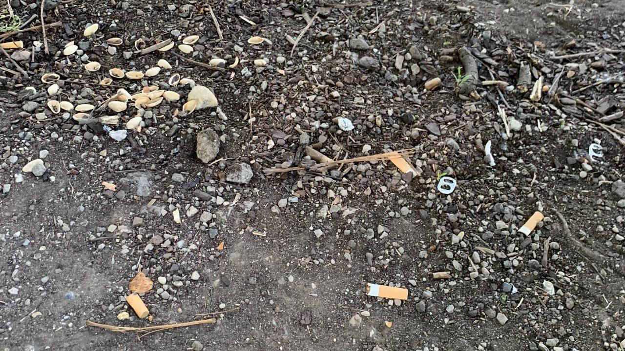 Zigarettenstummel auf der Hauptallee. Fotocredit: Energieleben Redaktion