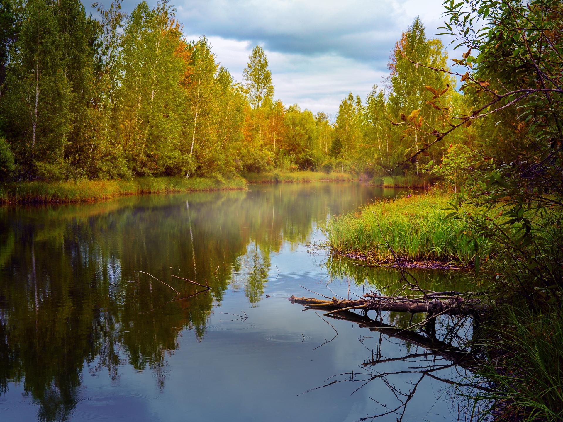 Das Ufer eines Sees oder auch Flusses bietet ein ganz spezielles Ökosytem, in dem sehr viele Pflanzen und Tiere Nahrung und Lebensraum finden. - Photocredit: pixabay.com/Larisa-K