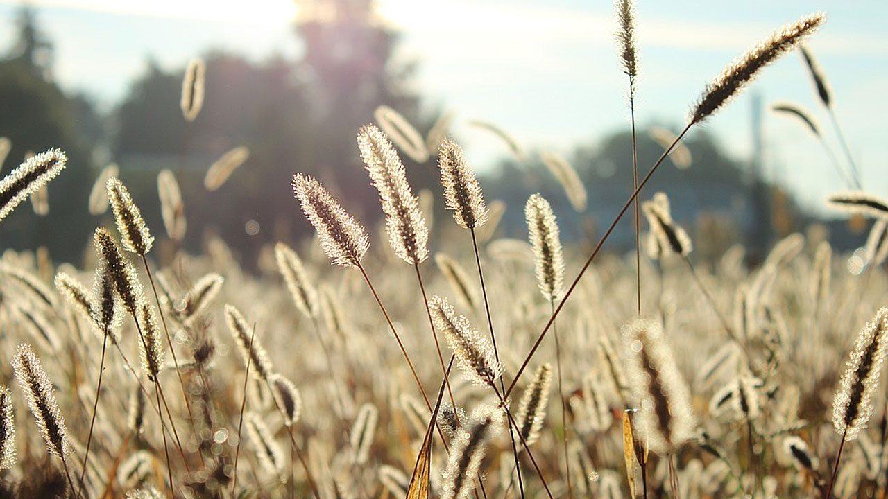 9. Meide Felder. Diese können deine Symptome verstärken. - Fotocredit: Pixabay/Free-Photos