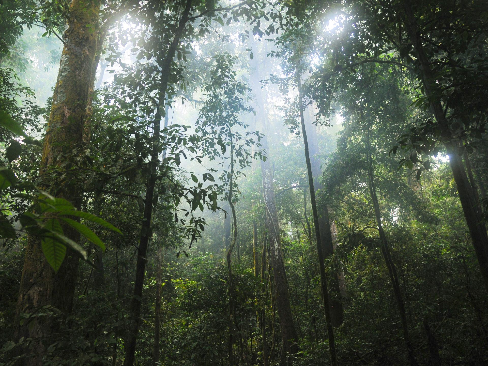 Der Erhalt speziell der letzten Urwälder unseres Planeten hat mehr Nutzen als nur die Bindung von CO2: diese Ökosysteme sind die letze Bastion für viele gefährdete Tier- und Pflanzenarten. - Photocredit: pixabay.com/stokpic