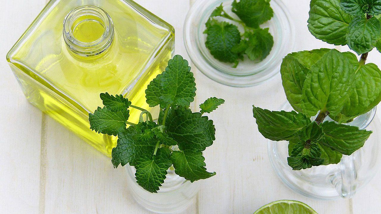 3. Ätherische Öle wie Eukalyptus und Kampfer. - Fotocredit: Pixabay/silviarita