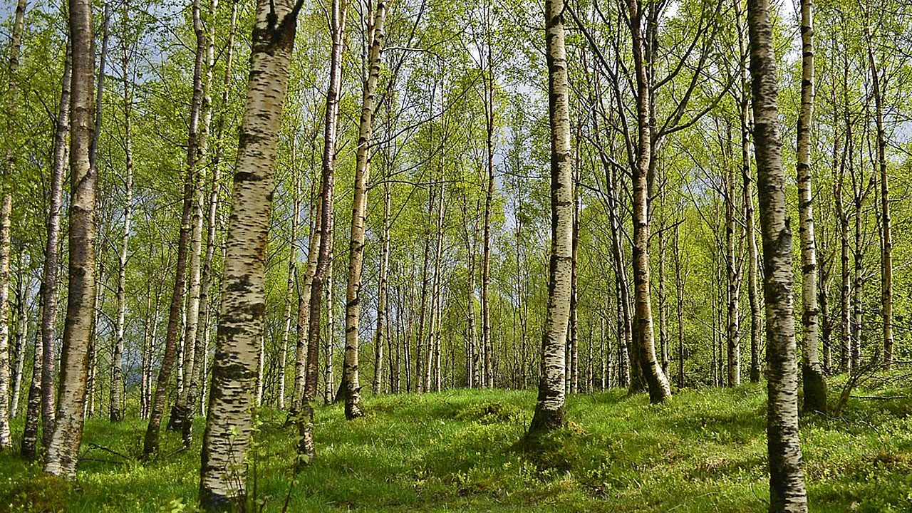 6. Geh in den Laubwald. - Fotocredit: Pixabay/smellypumpy