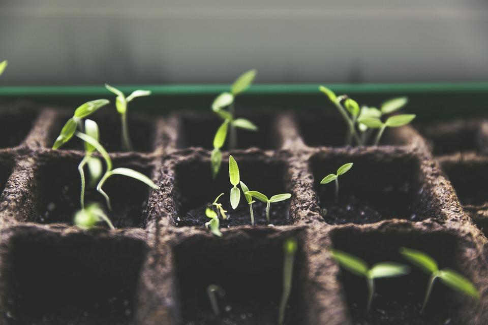 Pflanzen anbauen Mitten in der Stadt? Urban Farming wird immer beliebter – Foto: © Markus Spiske / pixabay.com