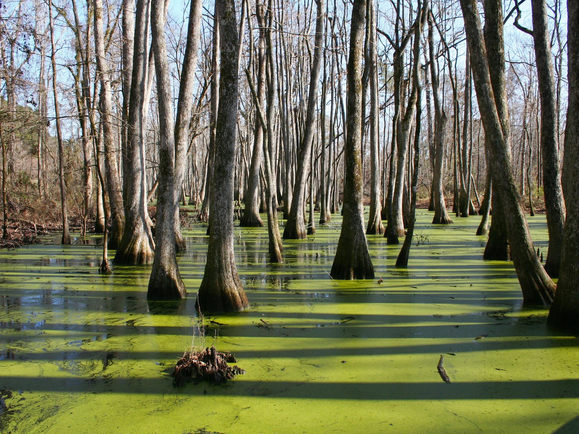 In Sumpflandschaften und Überschwemmungsgebieten werden Bäume mit ganz speziellen Herausforderungen konfrontiert. - Photocredit: pixabay.com/12019