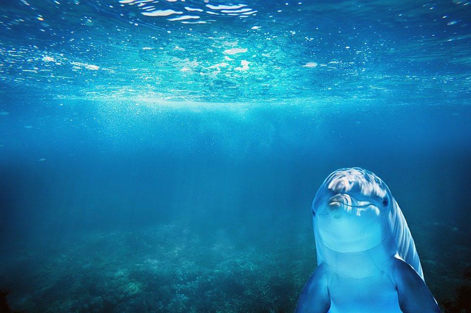 Hier kommen fünf gute Nachrichten für unsere Ozeane / Foto: © enriquelopezgarre via pixyabay.com