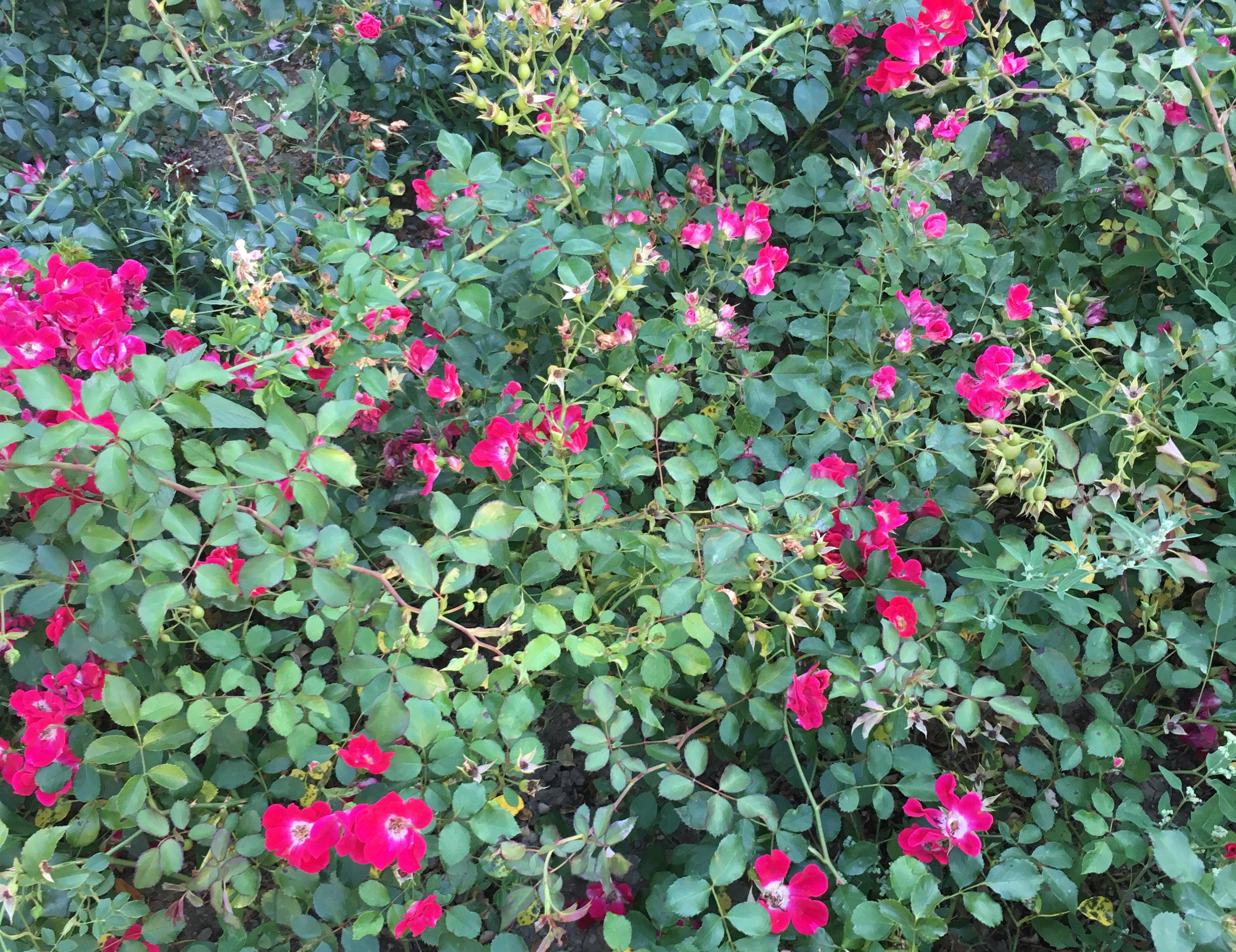 Blumenwiese im Lainzer Tiergarten, Fotocredits: Energieleben Redaktion