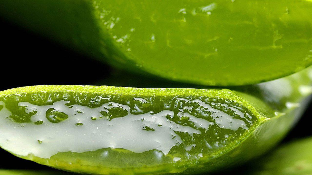 4. Aloe Vera lindert Sonnenbrände. - Fotocredit: Pixabay/casellesingold