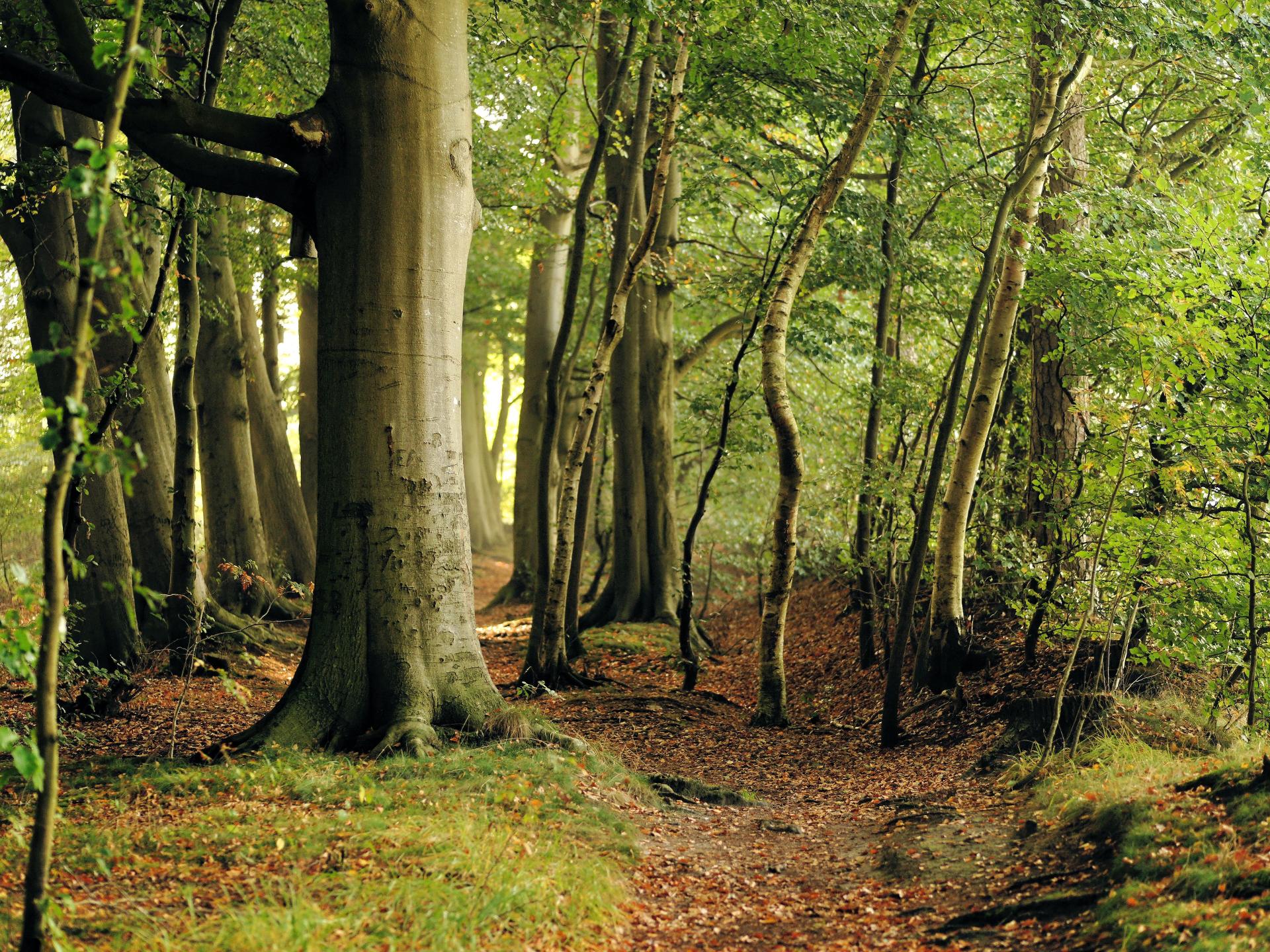 Buchenwälder finden wir fast überall in Mitteleuropa. - Photocredit: pixabay.com/Kapa65