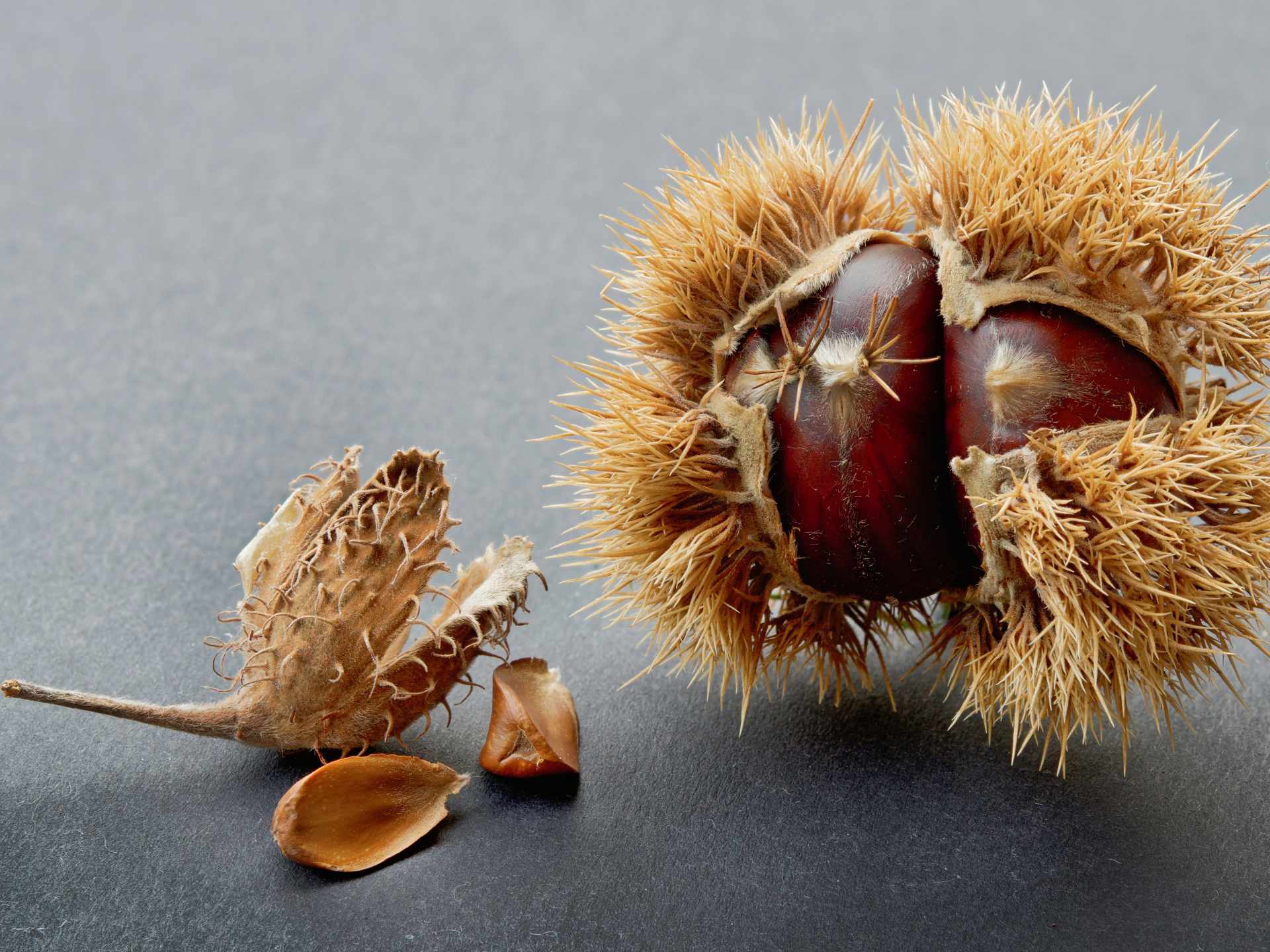 Bucheckern sind an ihrer stacheligen Hülle und der drei-kantigen Form sehr einfach zu erkennen. - Photocredit: pixabay.com/Paul_Henri