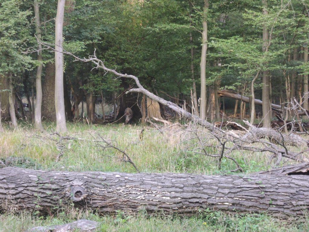 Lainzer Tiergarten, Fotocredits: Energieleben Redaktion
