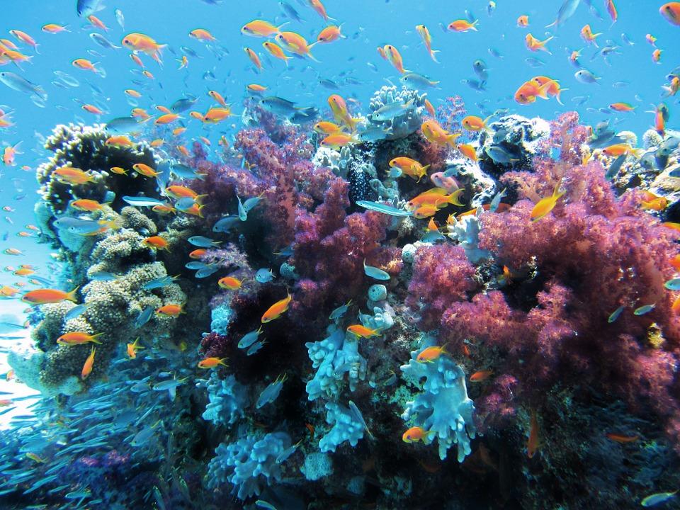 Die Artenvielfalt im Korallendreieck soll erhalten bleiben / Foto: © lpittman via pixabay.com