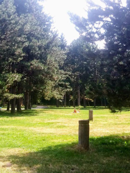 In Ruhe Sonnenbaden – auf den zahlreichen Wiesen im Prater auch in einer Millionenstadt kein Problem