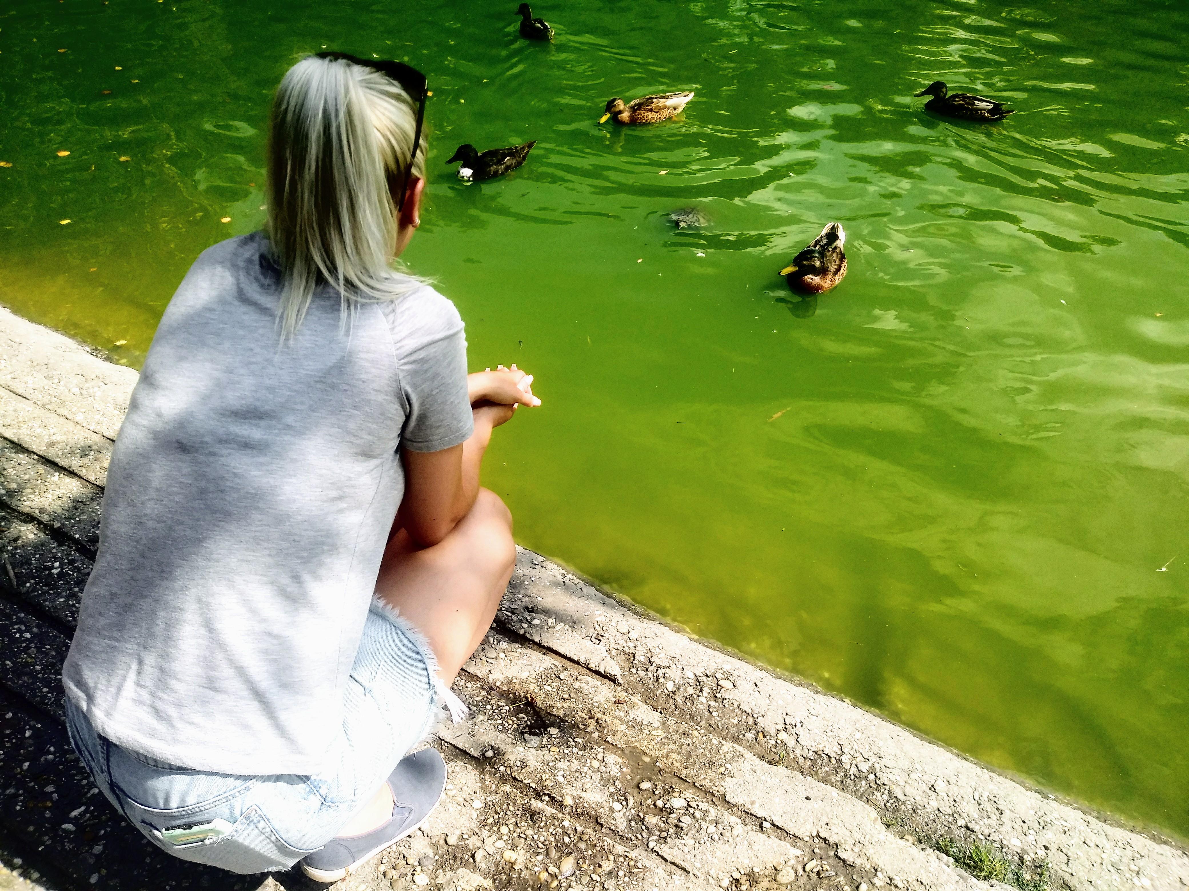 Wer genau schaut, der entdeckt die auftauchende Schildkröte inmitten der Enten