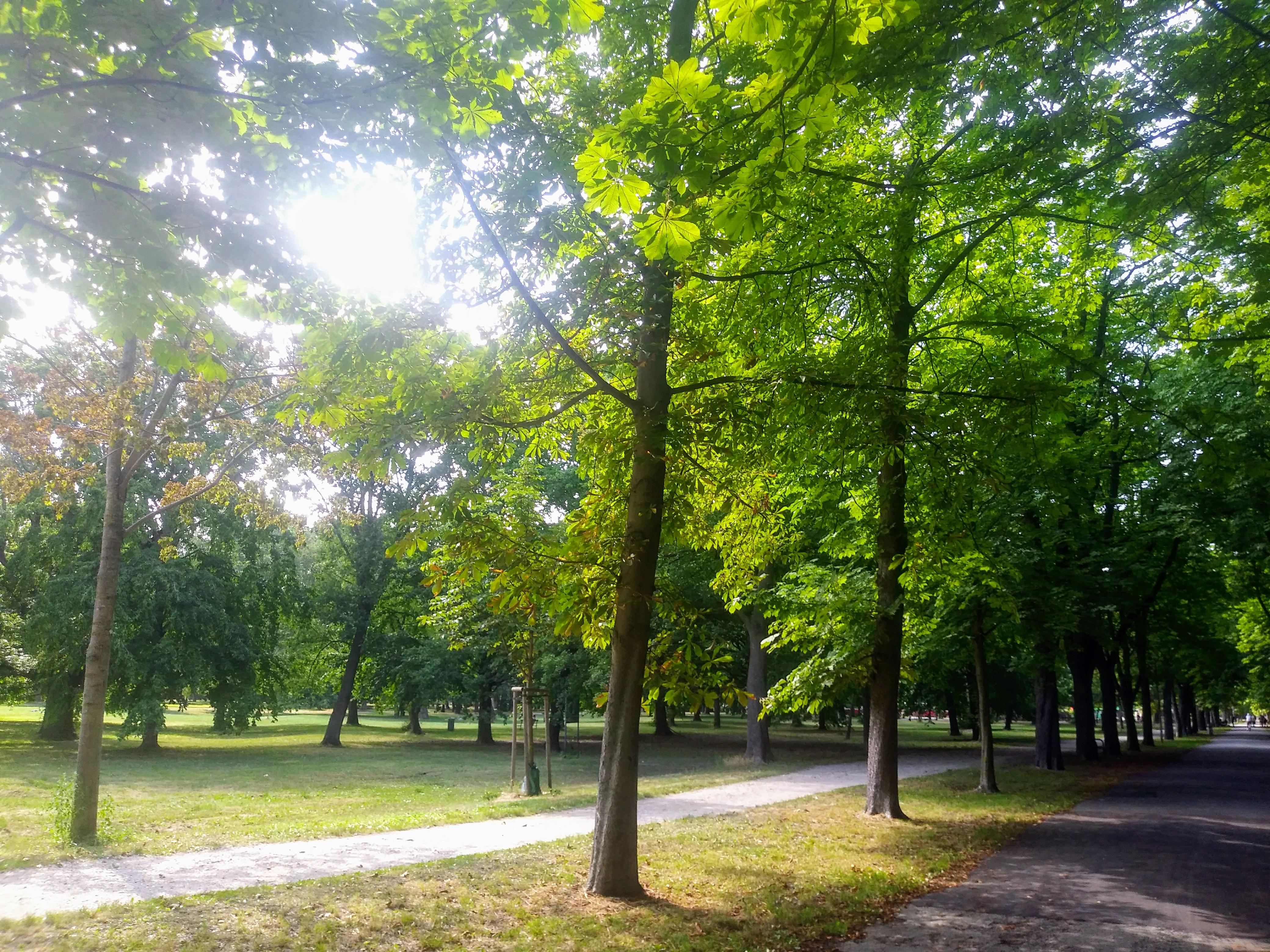 Die Hauptallee ist immer einen Spaziergang unter grünen Blätterdächern Wert