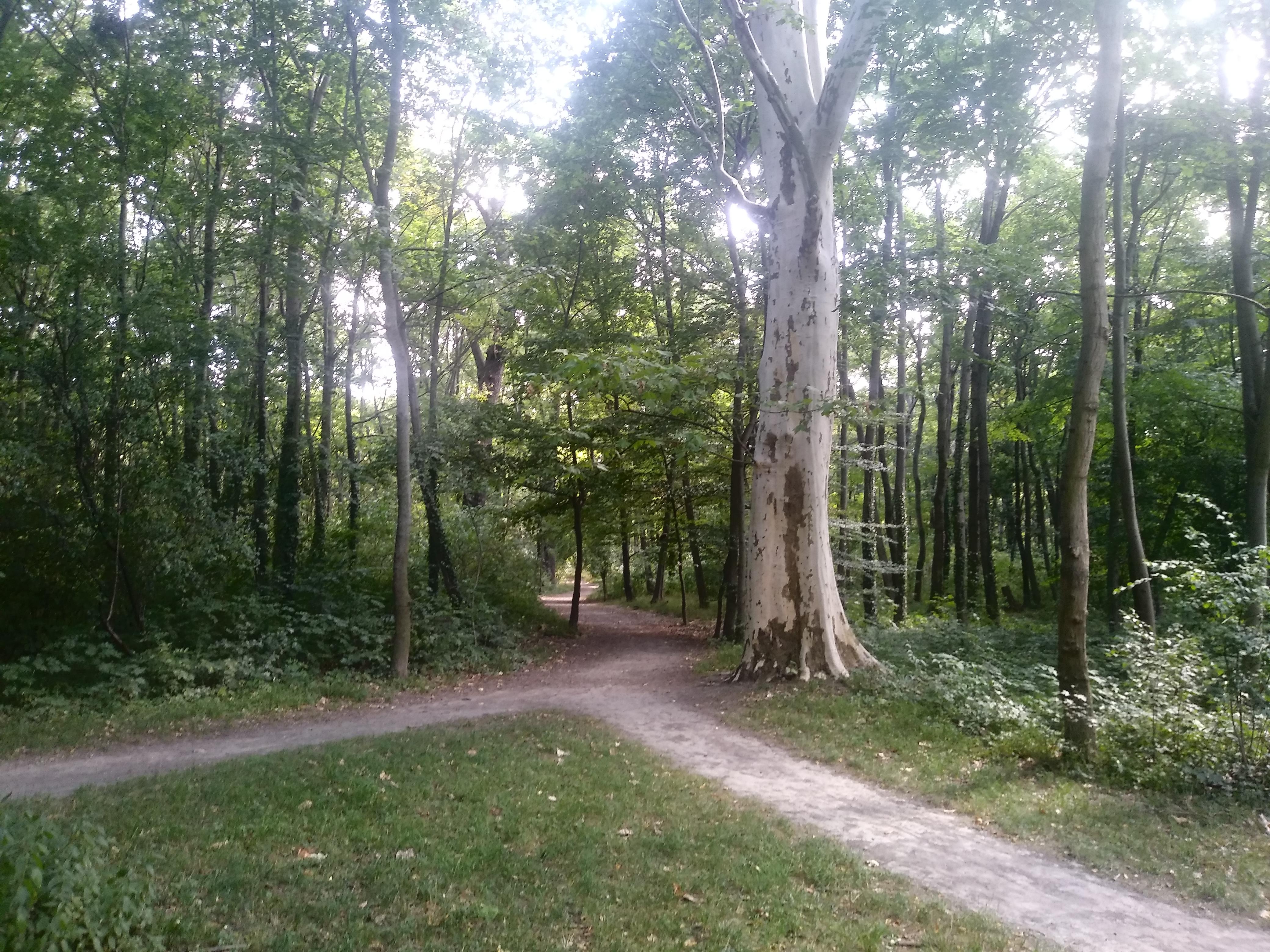 Von der U-Bahn braucht es im Prater nur wenige Minuten zu Fuß, bis man in verwunschen wirkende Auwälder eintauchen kann.