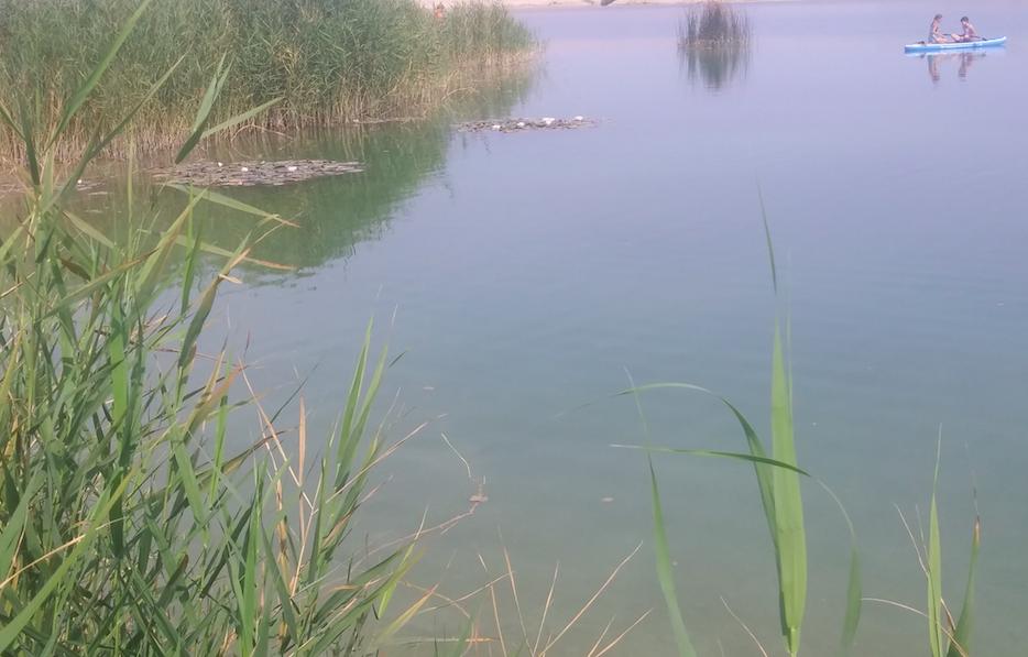 Naturidyll mit Ruderboot? Nicht nur Seestadt-Bewohner nutzen den See zur Erholung