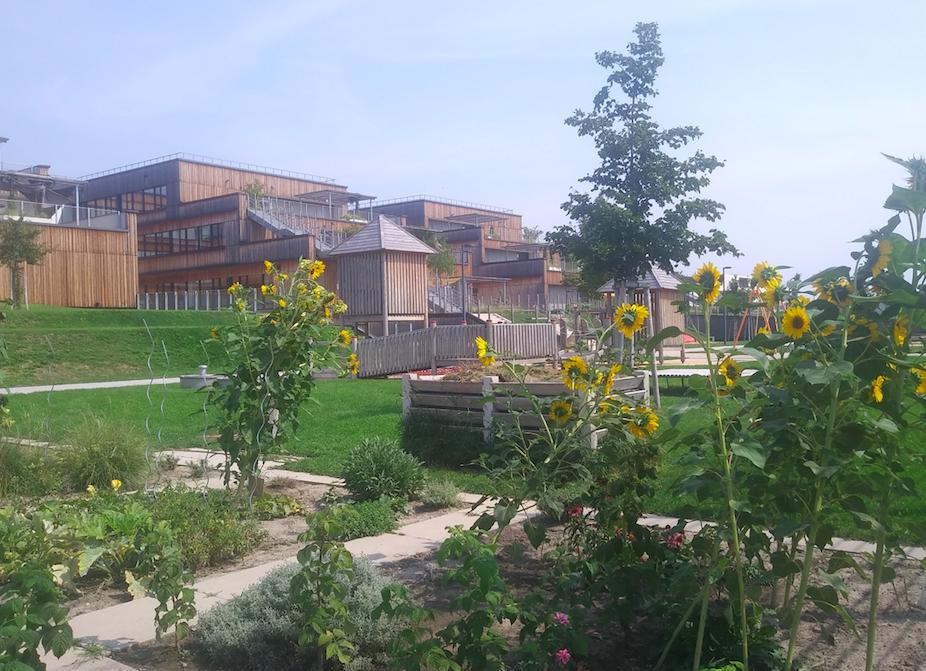 Nein, das hier ist kein Märchengarten sondern der Blick auf den begrünten Schulhof mit Blumenbeeten zum Bewirtschaften und dem Spielplatz im Hintergrund