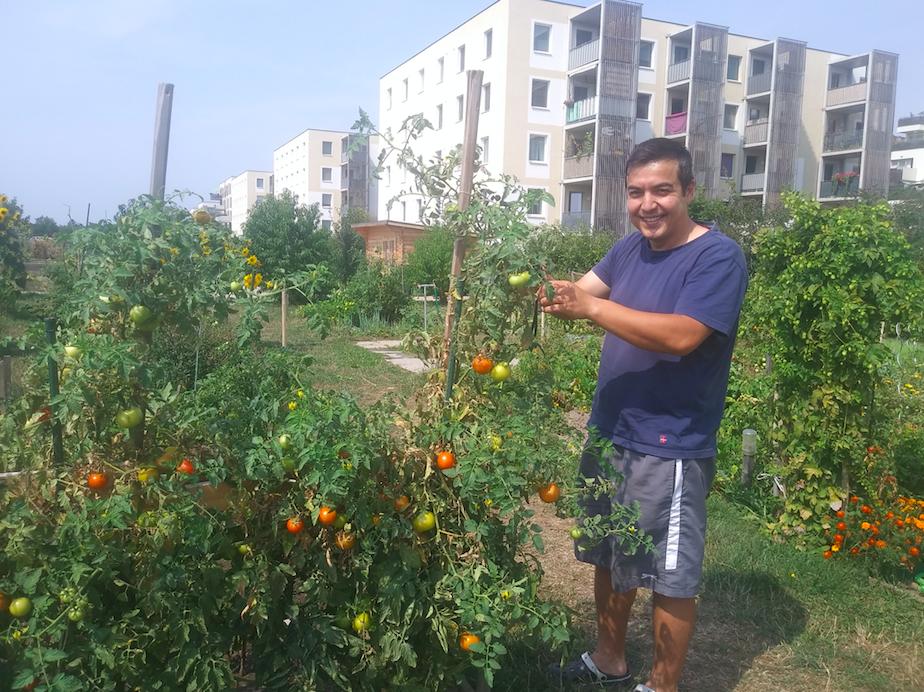 In diesem Garten bauen Bewohner der Seestadt ihr eigenes Gemüse und Obst an