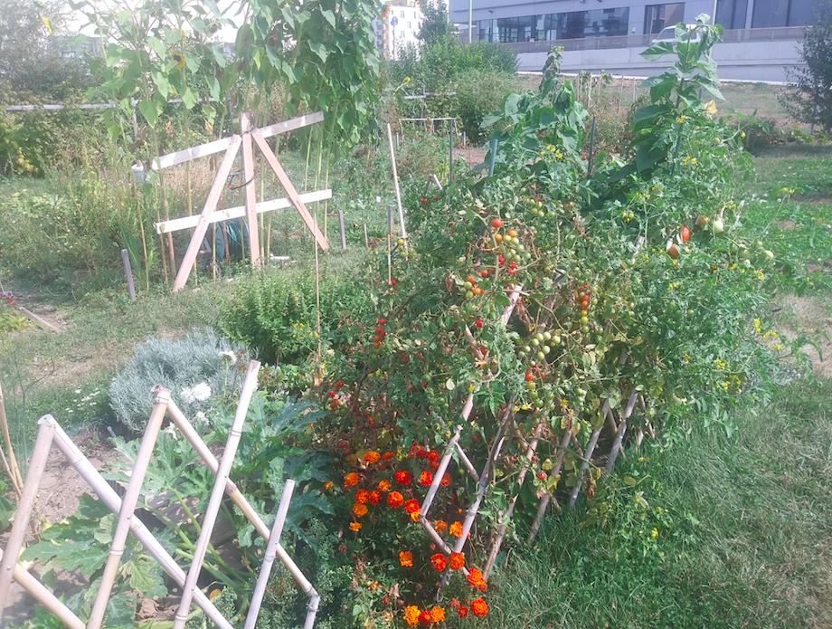 Landidyll trifft Stadtbewohner – ein eigener Gemüsegarten direkt in Wien