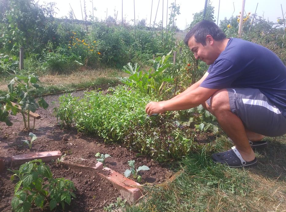 Die eigenen Kräuter, Gemüsesträucher und Obstbäume pflegen? Dafür braucht es keinen Schrebergarten