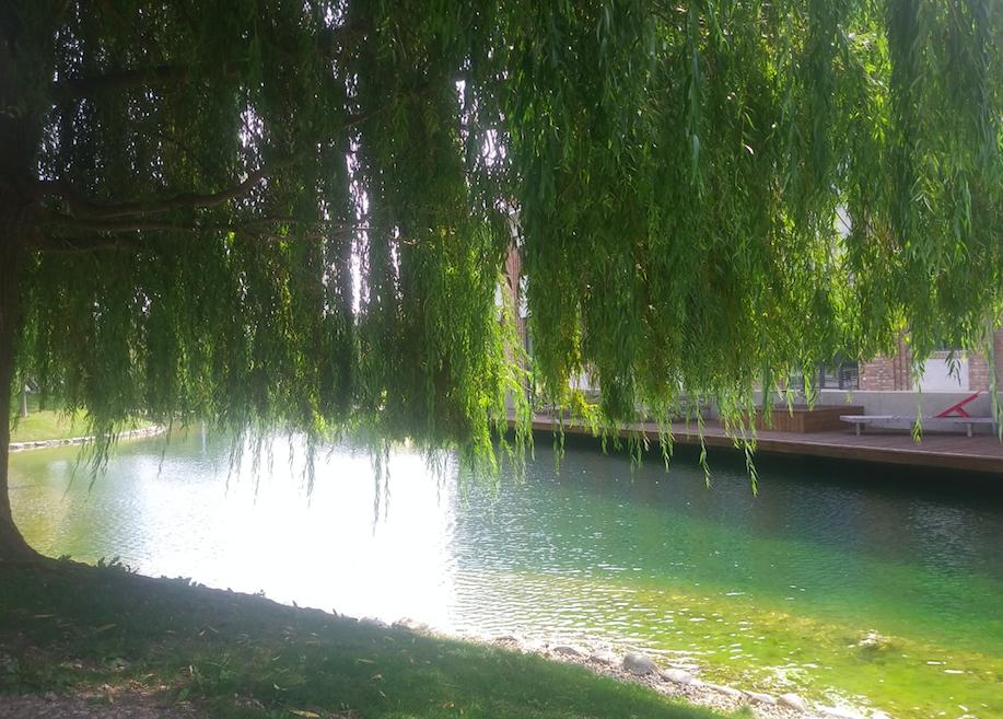 Romantic in the city – unter einem schattigen Baum mit Blick aufs Wasser das Leben genießen? Kein Problem im Viertel Zwei