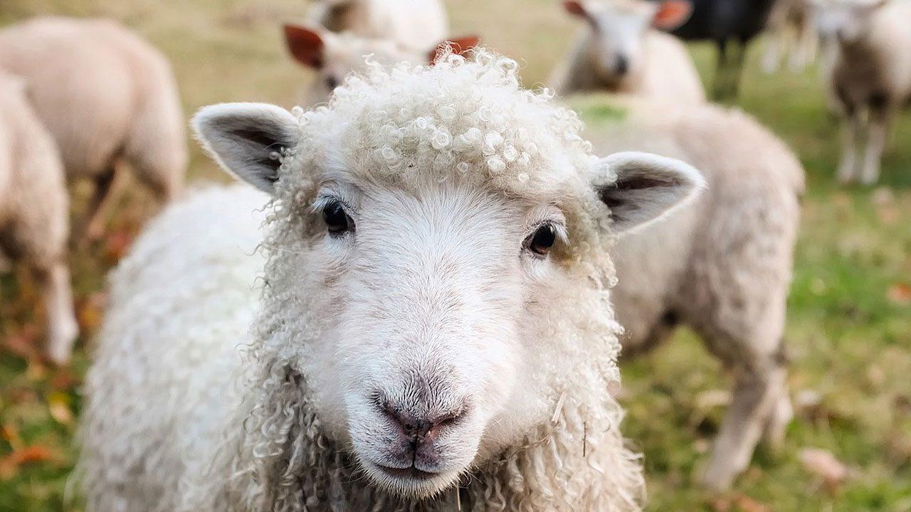 3. Ein Ausflug auf den Bauernhof ist gerade für Stadtkinder ein wahres Abenteuer. - Fotocredit: Pixabay/12019