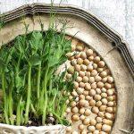 2. Um Sprossen zu ziehen, brauchst du ein Keimglas. Natürlich kannst du die Samen aber auch in Blumentopf ziehen.Fotocredit: Pixabay/Ekologiskt-Skafferi