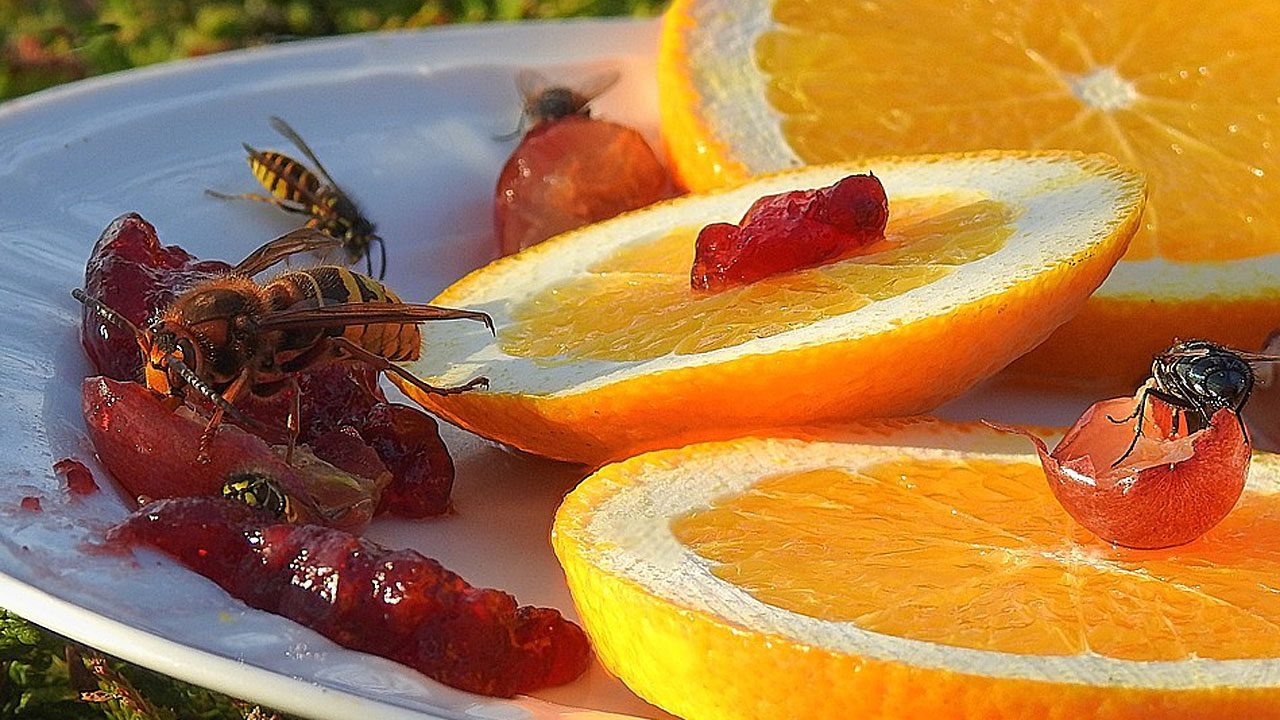 1. Ruhig bleiben. Wespen interessieren sich nicht für dich, sondern für deine Süßspeisen und süßen Getränke. - Fotocredit: Pixabay/ Katzenfee50