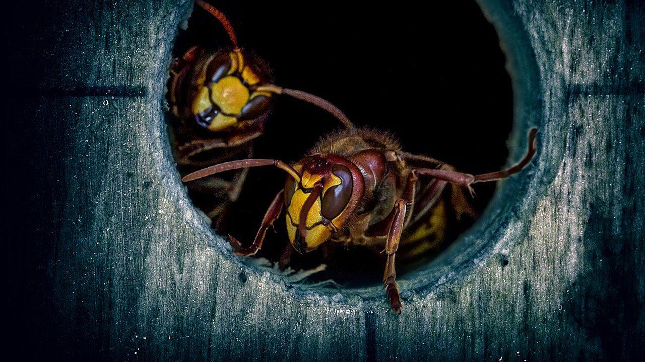 5. Entferne Fallobst möglichst rasch vom Boden. Die Gerüche locken Wespen an. - Fotocredit: Pixabay/umsiedlungen