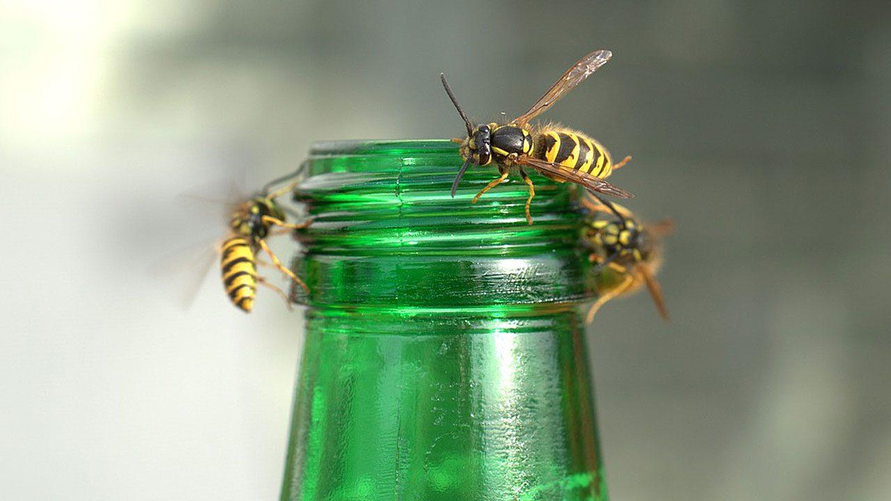 2. Deck deine Getränke zu und verwende einen Strohhalm, um aus Flaschen zu trinken. - Fotocredit: Pixabay/webandi