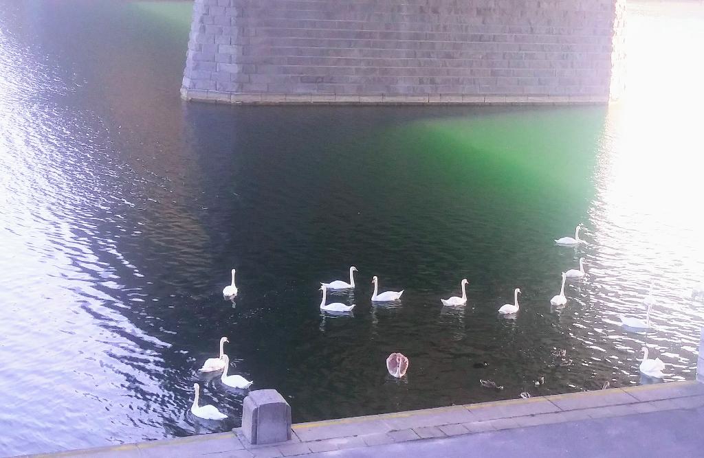 Neben seltenen Amphibien- und Fischarten fühlen sich auch die Schwäne auf der Donauinsel wohl und begrüßen Besucher gleich unmittelbar bei der U1 Station Donauinsel.