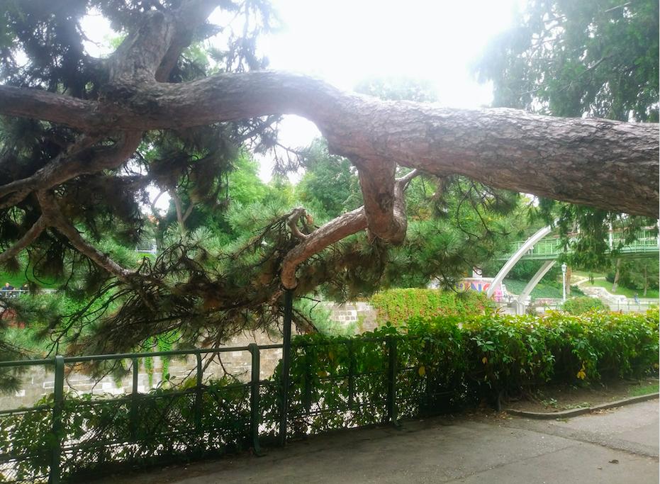 """""""Es wächst mir über den Kopf"""" bekommt hier eine ganz neue Bedeutung, wenn man sich ansieht, wie der Baum sich über den Spazierweg beugt."""