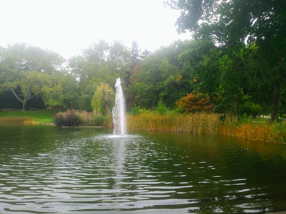 Besonders jetzt im Herbst, wenn sich die Blätter langsam zu verfärben beginnen, lohnt sich ein Besuch im Türkenschanzpark, bei dem man ruhig auch einmal einfach nur dem Wasserspiel zuschauen kann.