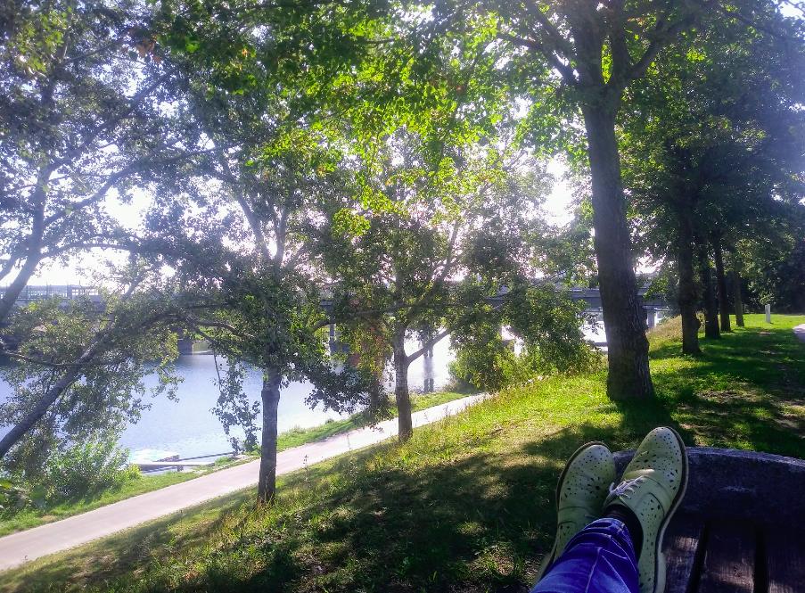Im Schatten chillen mit Blick aufs Wasser – das geht auf der Donauinsel an unzähligen Plätzen ganz hervorragend.