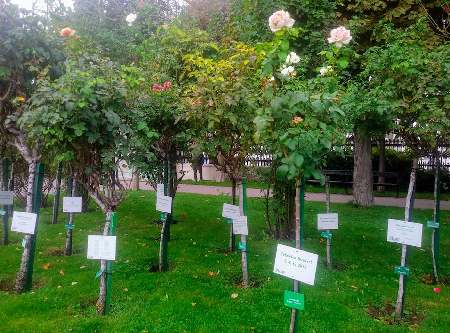 650 Euro kostet eine Patenschaft für 10 Jahre Rosenpflege. Dafür bekommt man auch ein Schild an der Rose mit einer persönlichen Widmung. Vielleicht eine Idee für ein Hochzeitsgeschenk?