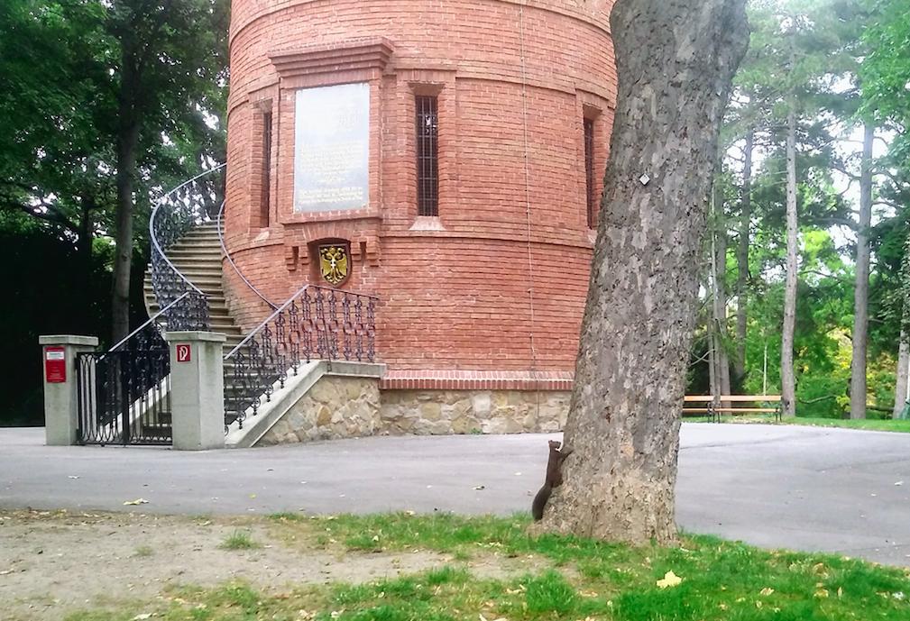 Eichhörnchensuchbild: Oben auf der Paulinenwarte hat man einen schönen Ausblick über Wien und den Wienerwald. Bei unserem Besuch war die Warte leider geschlossen. Dem Einchhörnchen macht das wohl nicht viel aus.