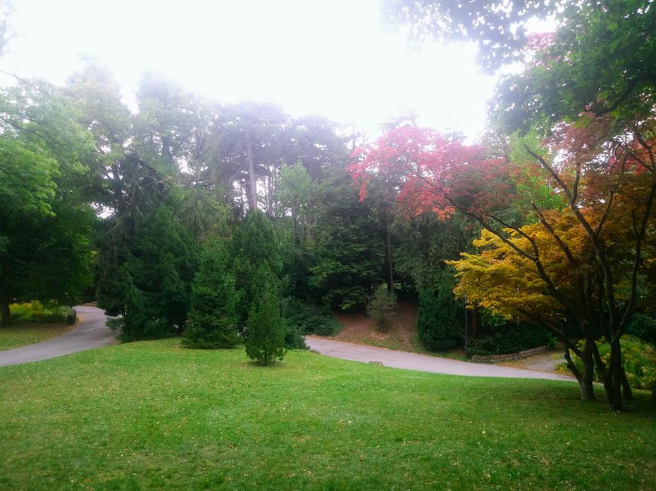 Jetzt im Herbst beginnt im Türkenschanzpark langsam ein ganz besonderes Blätterfarbenspiel.