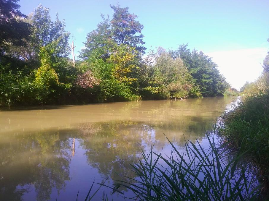 Wasserberuhigte Bereiche und Seitenarme erstrecken sich auf vielen Kilometern, um die Artenvielfalt zu fördern und zu erhalten.