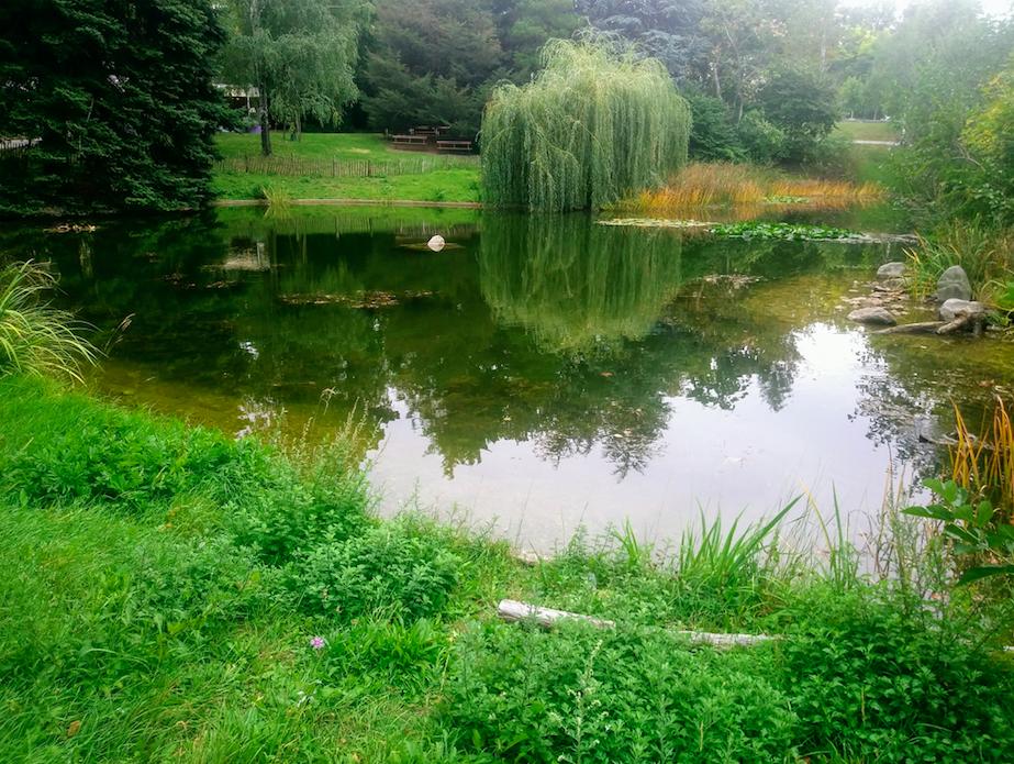Viel Grün und viel Wasser, der Türkenschanzpark wirkt an manchen Stellen wirklich wie ein kleiner Wellnesstempel mitten im Freien.