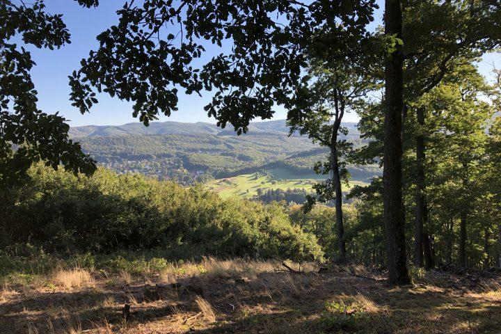 Der Wienerwald ist ein atemberaubender Juwel, der unseren Schutz verdient! Fotocredit: Energieleben Redaktion