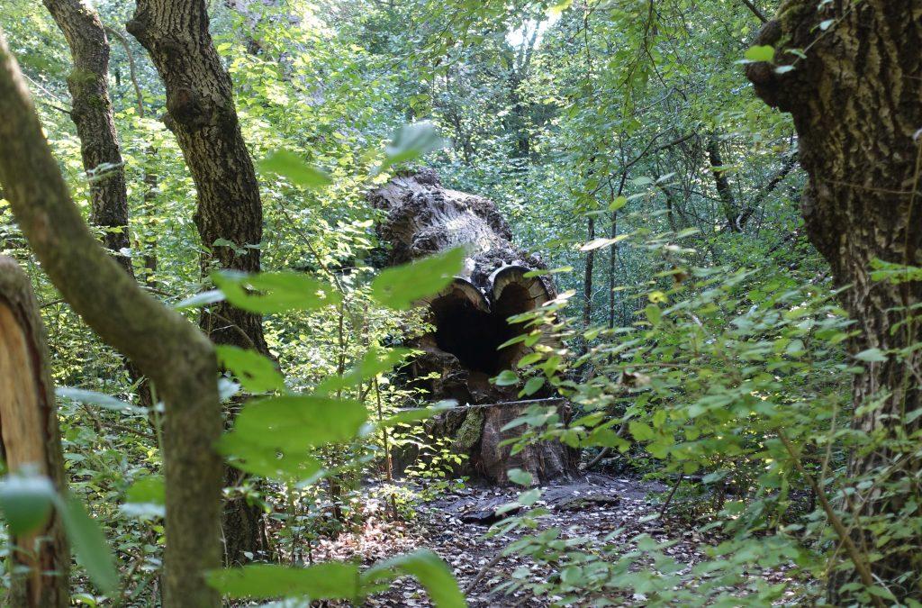 Wald in der Lobau, Photocredits: Energieleben Redaktion