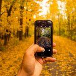 6. Geh auf Fotosafari! Egal, ob für die Spiegelreflexkamera oder fürs Handy - der Herst bietet wunderbare Motive! - Fotocredit: Pixabay/Free-Photos