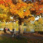 4. Mach eine Radtour! So kannst du Wien und seine Umgebung wunderbar erkunden! - Fotocredit: Pixabay/Hans