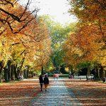 1. Mach einen Herbstspaziergang. Genieße die Farben und tanke Sonne! - Fotocredit: Pixabay/moritz320