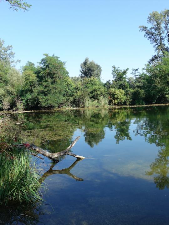 Die Lobau ist eine der beeindruckendsten Naturlandschaften Wiens! Fotocredit: Energieleben Redaktion