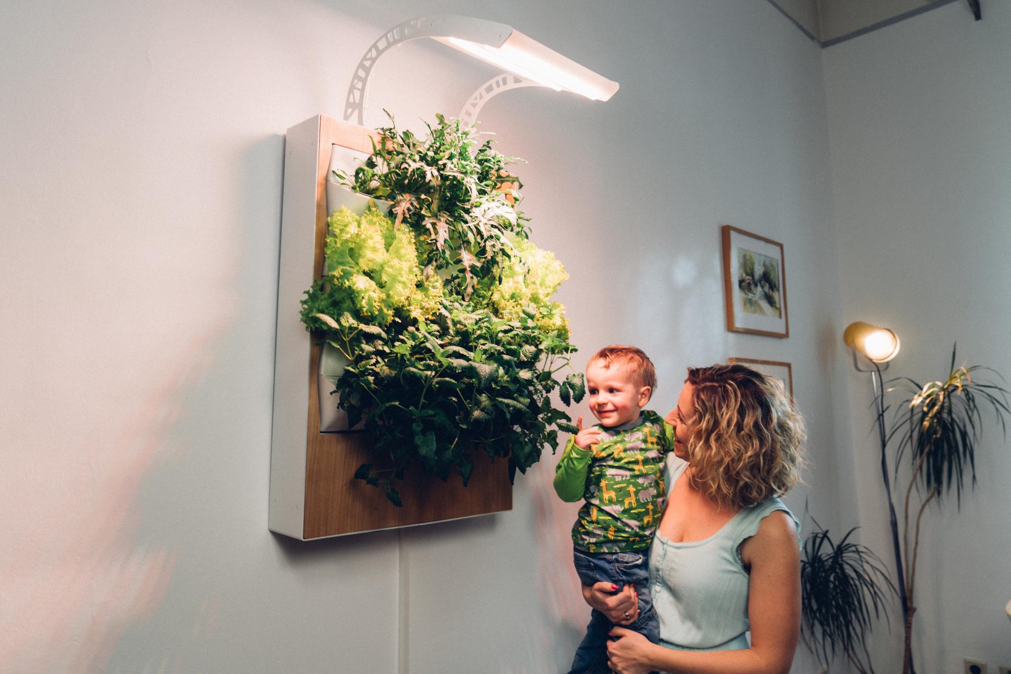 Vom Herbert kann man so viel abernten, wie man braucht und des Rest einfach weiter wachsen lassen – Foto: © Ponix Systems
